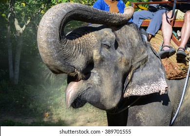 Elephant. Tourists ride on elephant, located in Chiang mai, Thailand.