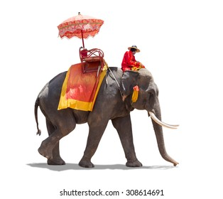 Elephant for tourists ride tour of the ancient city in Ayutthaya Thailand. isolated on white background with clipping path