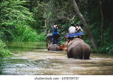 Elephant trekking adventure through jungle travel in Thailand