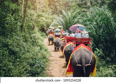 Elephant trekking through jungle in Krabi Thailand Tavel Concept