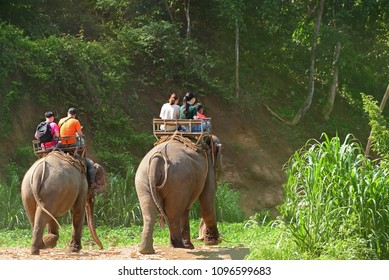 Elephant trekking through jungle in Maetaman elephant camp chiangmai northern Thailand