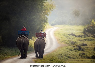 Elephant trekking through jungle in northern Laos