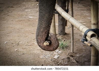 Elephant trunk grabbed the food.