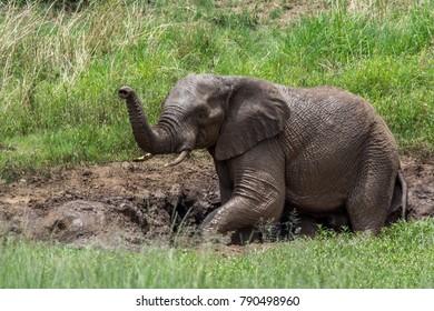 Elephant, Tusk, Trunk, Baby, water