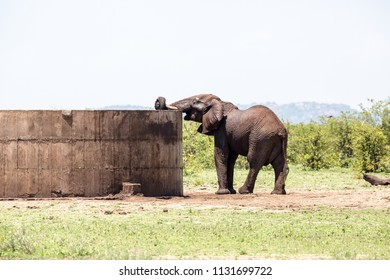 An elephant using a clever way to drink water with it's trunk from a dam that is quite high.