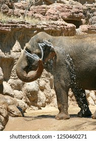 An elephant using its trunk as a water hose to give itself a bath