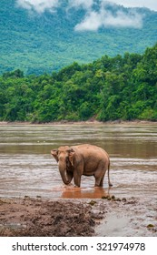 An elephant is waiting to take a bath in Mekong river where is close to Pak Ou cave, Luang Prabang, Laos.