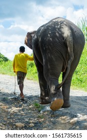 Elephant walking away with a man