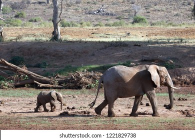 Elephant walking with cub in wild