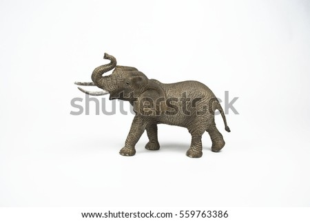 Elephant Walking Isolated On White Background Stock Photo Edit Now