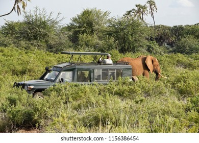 Elephant walks past a safari vehicle, Samburu Game Reserve, Kenya