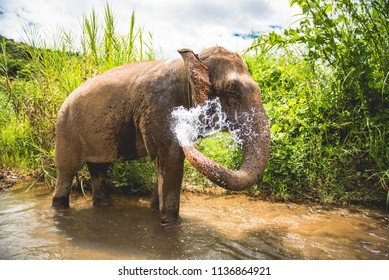 Elephant washing itself with water splash from its trunk. Enjoying freedom in the sanctuary jungle.