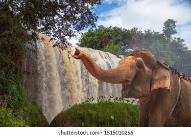 Elephant Waterfall. Dalat. Vietnam. In central highland of Vietnam, elephant on the background of a waterfall.
