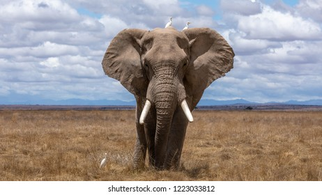 elephant in the wilderness of Africa