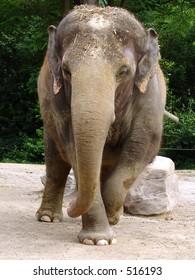 Elephant at the zoo