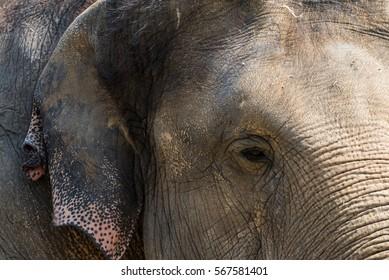 An elephant at a zoo.