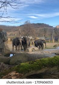 Elephant in the zoo.  Elephant family