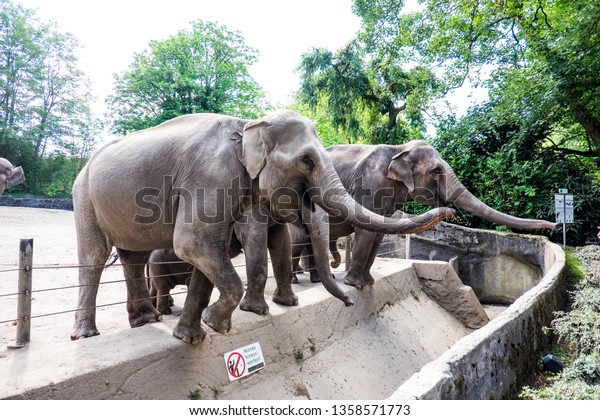 Elephant in zoo reaching out to grab food