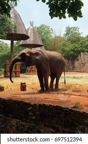 elephants - Shutterstock ID 697512394