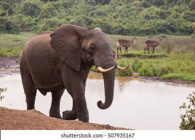 elephants in Aberdare National Park in Kenya Africa