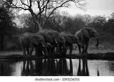 elephants in an african safari