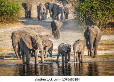 Elephants and a baby drinking in Cuando or Kwando river Chobe National Park, Botswana, Africa