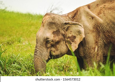Elephants belong in nature, wild and free