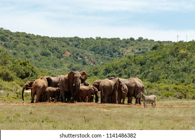 Elephants bunching together at the watering hole
