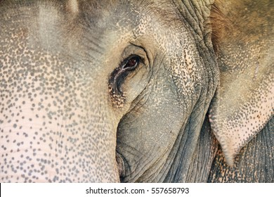 The elephant's capacity for sadness and grief is truly unique amongst members of the animal world, as it is particularly complex in terms of emotions.