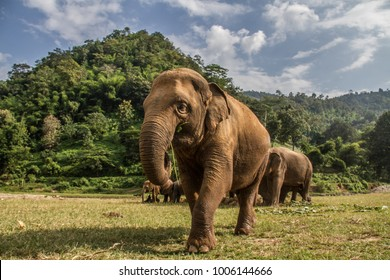 Elephants in Chiang Mai's Elephant Nature Park, Thailand