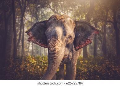 elephants in Chitwan. In the jungles of Nepal