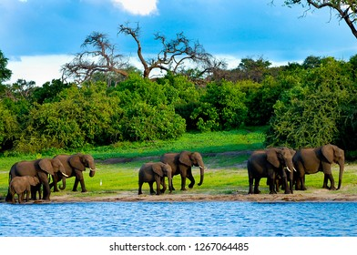 Elephants - Chobe National Park - Botswana