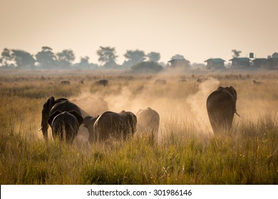Elephants in the Chobe National Park, Botswana, Africa
