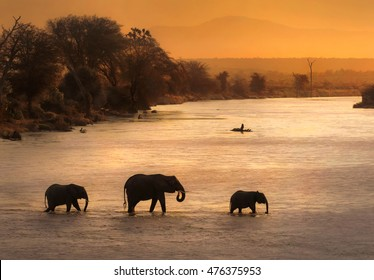 elephants crossing river during sunset