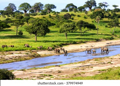 Elephants crossing  the river in Serengeti National Park, Tanzania, Africa