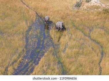 Elephants crossing water in the Okavango delta (Botswana), aerial shot