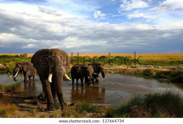elephants drinking by a waterhole