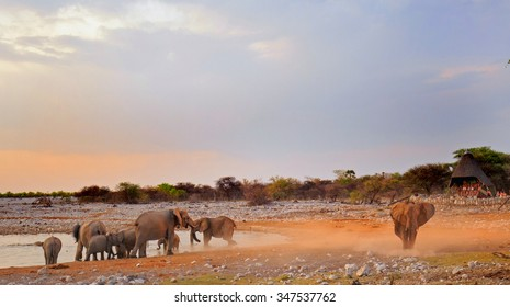 Elephants dusting themselves at dusk in Okaukeujo.  This is a very popular waterhole with a camp overlooking the daily activity -  visible noise due to low light and flying dust particles, Etosha