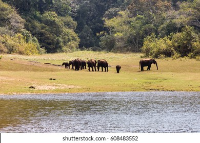 Elephants enjoying in Thekkady, Kerala, India