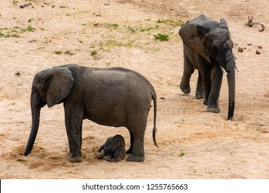 Elephants family with cute baby elephant on South African savanna