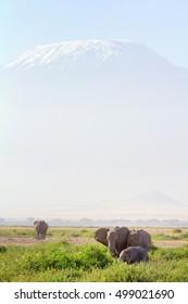 Elephants in front of Kilimanjaro at the background shot at Amboseli national park, Kenya. Vertical shot