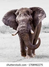 Elephants, the gentle giants of nature