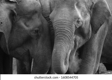 Elephants, a great creation of nature are often seen in the national parks of India. They are usually seen in a herd.