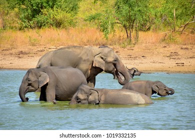 Elephants having fun in the water