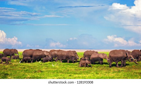 Elephants herd on African savanna. Safari in Amboseli, Kenya, Africa