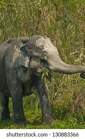 Elephants are the largest land animals were present and endangered species.