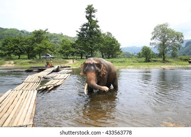 elephants and mahout across river,Kanachanburi,Thailand on May,23 2015:Thailand have several elephant camps ,its offers elephant rides, bathing, bamboo rafting and special training mahout courses.