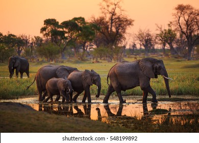 Elephants in Moremi National Park - Botswana