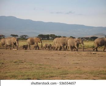 Elephants in a national park in Kenya