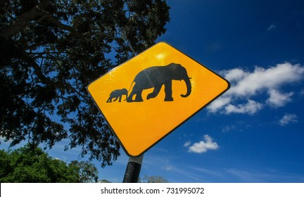 Elephants on the road sign, Sri Lanka